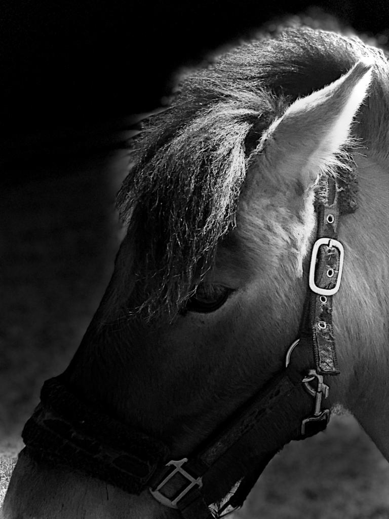 Nabízíme Pronájem pony