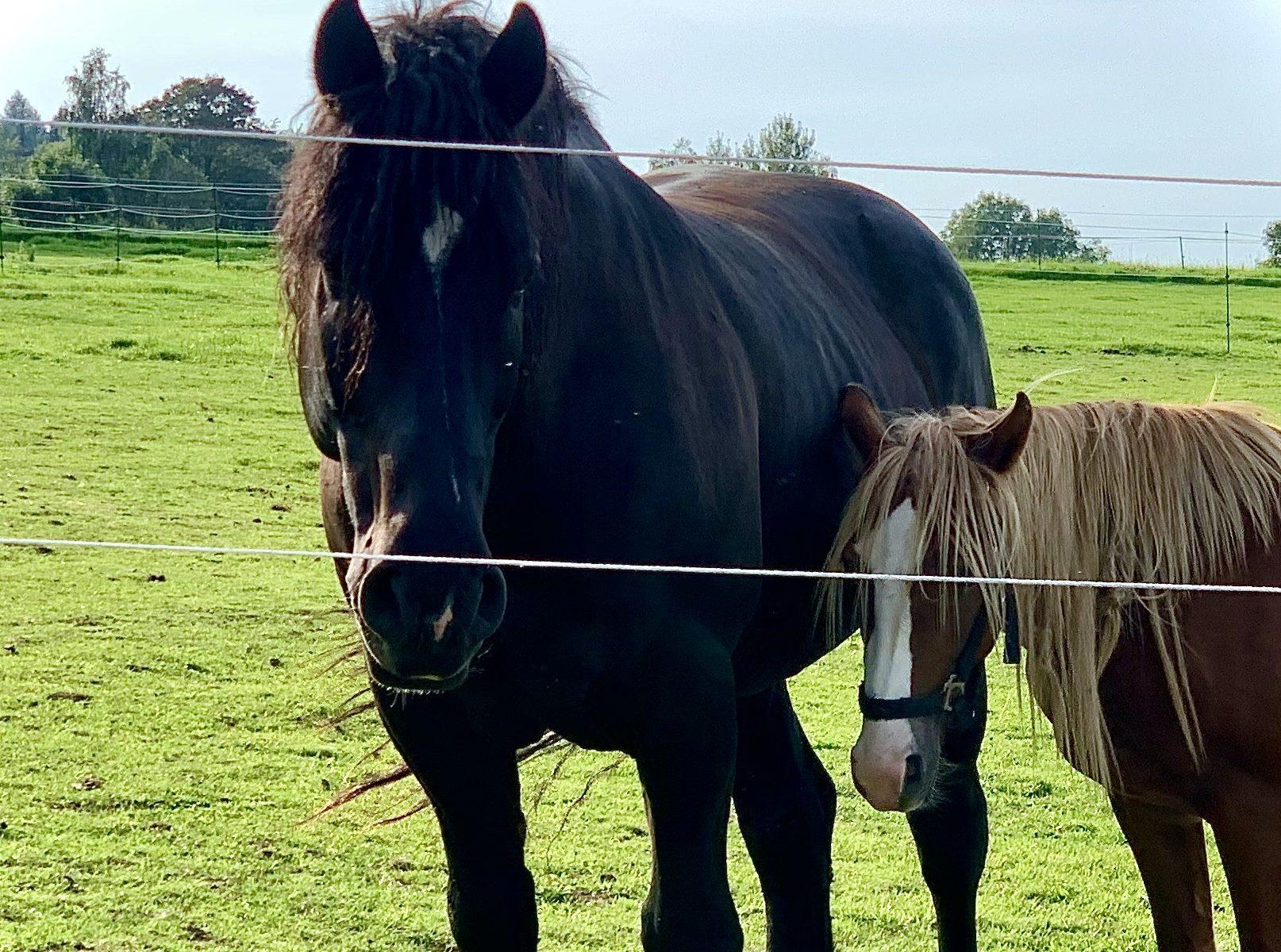 Pronájem koní